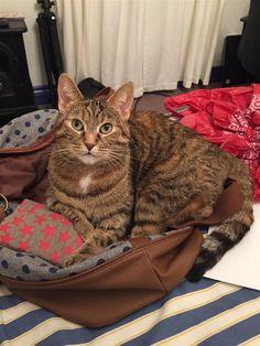 Lost Cat - Tabby - Coboconk, ON, Canada K0M 1K0