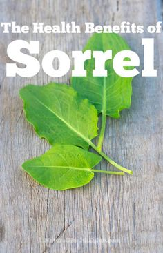 A look at some of the wonderful health benefits of sorrel... And a tea.  Warning: Natural laxative!