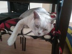 Alfie Cat | Pawshake