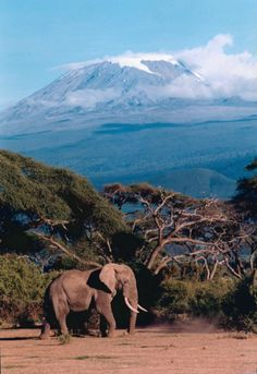 """""""Two Giants"""" - Northern Tanzania - by Peter Stanley"""