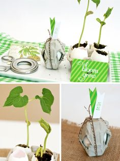 Mrs Greens friends are host an Earth Day party, here is one of the simple ideas they will be using.
