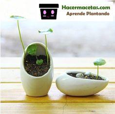 saleros de ceramica reciclados en macetas