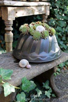 Garden Junk, Garden Deco, Terrace Garden, Garden Art, Home And Garden, Succulent Pots, Succulents Garden, Garden Plants, Low Maintenance Plants