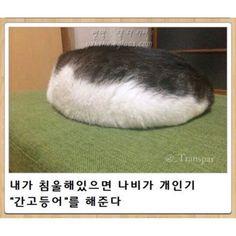 Wtf Funny, Funny Cats, Funny Jokes, Hilarious, Animals And Pets, Funny Animals, Cute Animals, Cat Park, Dog Lovers