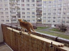 balkon kočka - Hledat Googlem