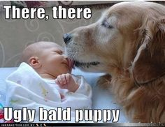 There, there  Ugly bald puppy