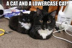 Cat and lower case cat.