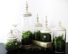 Apothecary, Jar, Terrarium, Organic, Plants, Wedding, Centerpiece