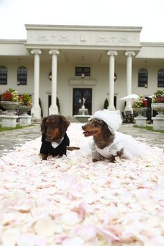 Weenie wedding!