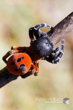 Black,Orange and Hairy by Peter Bates, via 500px