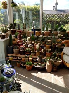 I&Apos;M running out of space in the conservatory! cactus and suc Cacti And Succulents, Planting Succulents, Cactus Plants, Planting Flowers, House Plants Decor, Plant Decor, Indoor Garden, Indoor Plants, Little Gardens