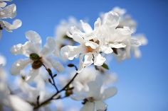 Breathtaking Beautiful Flowers Photos  by EGIS on MARCH 15, 2013 in INSPIRATION,PHOTOGRAPHY