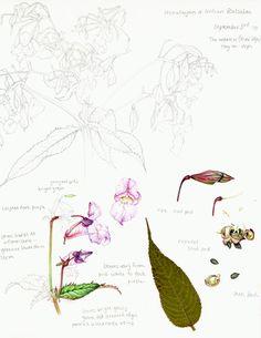 Sketchbook Portfolio - Lizzie Harper