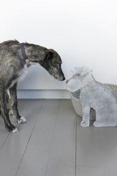 Mungo & Maud dog pho