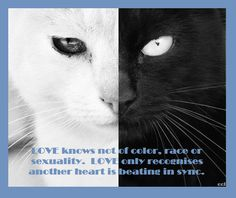 "LOL CAT ""LOVE"""