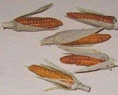 Fimo and raffia make these corn cobs