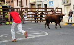 Santacara: Vacas Hermanos Ganuza (5) Cow, Animals, Cows, Siblings, Fiestas, Animales, Animaux, Animal, Animais