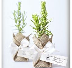 Eco-friendly wedding favors.