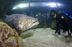Diving at the Denver Aquarium