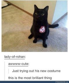 You have a need to lots of humor if you want to get through your day without losing your sanity.These black Cat Memes are helpful for that.Read This Top 24 Black Cat Memes Cute Funny Animals, Cute Baby Animals, Funny Cute, Animals And Pets, Cute Cats, Hilarious, Pinterest Foto, Cats Diy, Animal Memes