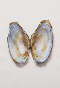 Saara Vainio: Näkinkenkä III / Shell III. Watercolour, 17 x 25 cm. 2011 Watercolour, Past, Shells, Draw, Summer, Painting, Watercolor, Shelled, Past Tense