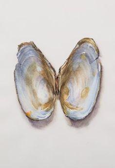 Saara Vainio: Näkinkenkä III / Shell III. Watercolour, 17 x 25 cm. 2011