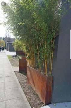 Articles, tips and advice for growing bamboo in Seattle, Washington. Bamboo In Pots, Bamboo Planter, Bamboo Garden, Bamboo Tree, Bamboo Landscape, Landscape Design, Small Backyard Landscaping, Modern Landscaping, Shade Garden Plants