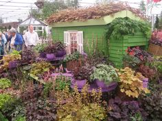 I'm in love with Heuchera's, there are so many and lots of different colors.