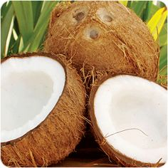 Google Image Result for http://www.indiatva.com/wp/wp-content/uploads/2012/04/coconut1.gif