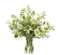 Preorder for January | Daisy Coneflower (WF378): Daisy Coneflower, Green White, Glass Jar, 19wx19dx18h