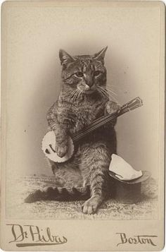 I present a cat playing the ukulele with a tophat - Imgur
