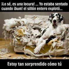 Perro: Lo se es una locura el sillon exploto http://www.xdlol.com/2014/07/perro-lo-se-es-una-locura-el-sillon.html