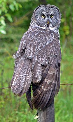 Grey Owl HWY 762