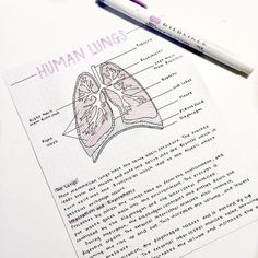 Trendy how to take notes for anatomy 21 ideas Nursing School Notes, College Notes, Medical School, School Organization Notes, Study Organization, Medicine Notes, Science Notes, Pretty Notes, School Study Tips