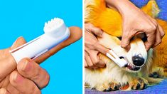 - Amazing pet gadgets - How to remove stains and smells from the carpet - DIY Bed for a dog - Funny hacks for cat lovers 5 Min Crafts, 5 Minute Crafts Videos, Diy Crafts Hacks, Craft Videos, Cute Funny Dogs, Diy Funny, Funny Hacks, Cool Paper Crafts, Fun Crafts