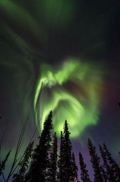 Aurora over Delta Junction, Alaska. Birch Leaf Photography