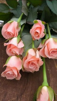 I absolutely adore these perfect pink roses! I sooo do. Beautiful Rose Flowers, Amazing Flowers, My Flower, Pink Flowers, Beautiful Flowers, Colorful Roses, Beautiful Beautiful, Cactus Flower, Exotic Flowers