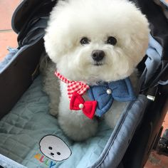 Cute Cats And Dogs, Cute Dogs And Puppies, Big Dogs, I Love Dogs, Animals And Pets, Cute Animals, Doggies, Cutest Dog Ever, Cutest Dogs