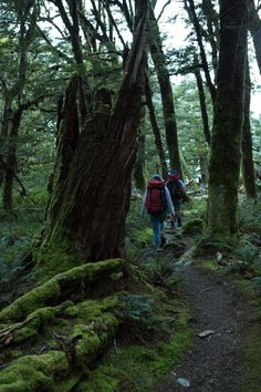 A breathtaking hike through enchanted forests and open tussock flats. Forests, Enchanted, The Outsiders, Hiking, Explore, Walks, Woodland Forest, Trekking, Woods