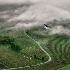 Nebbiolo a red wine from the Piedmonte region is named for the mist or fog (Nebbia) that rolls in over the vineyards.  #wine #travel #italy © Fabio Polosa