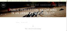 Public Perception: An Evening in an Urban Penguin Colony — Wild Melbourne