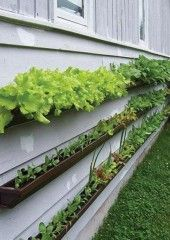Vegetable Garden Design on Wall - Gardening Design Ideas | Your Home Design Inspiration
