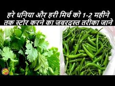 Wrap it with newspaper and store it in a air tight container n all put it in a fridge it will remain fresh.if corinader or green chilli has moisture, let it. Fresh Coriander, Curry Leaves, Cilantro How To Store, Craft From Waste Material, Green Chilli, Fruit Trees, Food Hacks, Indian Food Recipes