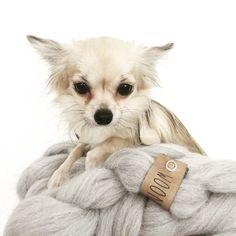 Plaid wol