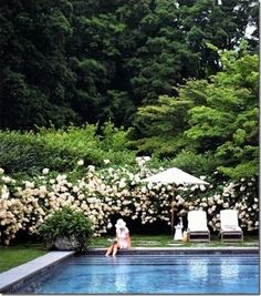 Love the minimal pool decking.grass almost right up to the edge. Also love the clean lines of the stairs all the way across the pool. I love the giant pot in the corner of the pool. Also love the amazing roses beyond the grass. Outdoor Retreat, Outdoor Spaces, Outdoor Living, Annabelle Hydrangea, Living Pool, Beautiful Pools, Gorgeous Gorgeous, Simply Beautiful, Beautiful Things