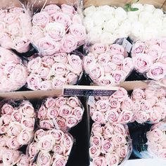 Dreamy Pink Roses |