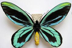 As borboletas mais raras do mundo | Sampex Dedetizadora