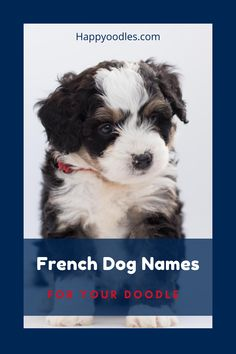 Looking for a name for your doodle? Since doodles are part poodle it only makes sense to give them one of the many French dog names. After all poodles are most often associated with the French. Even if you don't have a doodle or a poodle, French dog names add a sense of sophistication to any breed. Check out our list of more that 450 French dog names for your new puppy. (#Frenchdognames, #dognames, #dognamesboy, #dognamesgirl, #Dognamesfrench, #dognamesunique, #newpuppy, #newpuppyparents) French Dog Names, French Dogs, Cute Dogs Breeds, Dog Breeds, Dog Names Unique, Big Dog Little Dog, You Doodle, Group Of Dogs, Dog Information