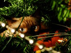 The most amazing cat ever! Now, the Christmas version of it! I hope you enjoy the picture as much as the cat seems to enjoy Christmas prep. Christmas Kitten, Christmas Animals, Christmas Time, Christmas Christmas, Funny Games, Christmas Pictures, Beautiful Christmas, Animal Photography, Dog Cat