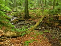 Inspiration for a Woodland Dry Creekbed File:Stužica primeval forest, Slovakia.jpg